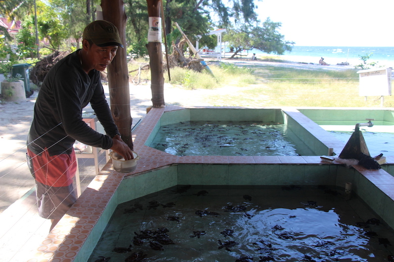 """Abdul """"Bolong"""" Hanan feeds baby green sea turtles at his turtle sanctuary in Lombok, Indonesia. His small project has helped increase the local population of the species. Photo by Melati Kaye."""